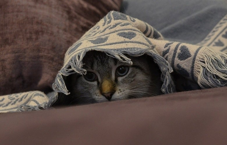 How To Hide A Pet From The Landlord